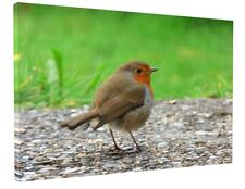 STUNNING RED ROBIN BIRD WILDLIFE CANVAS PICTURE PRINT CHUNKY FRAME LARGE #A170