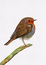 Red Robin Bird Painting Signed Limited Edition A4 Print Wildlife Gift