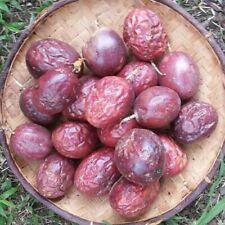 Passiflora edulis/passion flower/passion fruit-set of 20 seeds