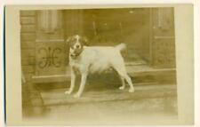 ca. 1920 VINTAGE rppc PET DOG STANDS on STAIR STEP JACK RUSSELL or BEAGLE ???