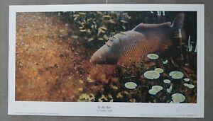 Fishing Angling Art Print Fish Carp To the Bar Signed Artist Richard Smith