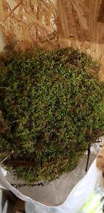 Beautiful Natural Dry Sheet Moss (Aprox 6 Sq Feet )