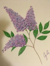 colored pencil drawing flowers lilac