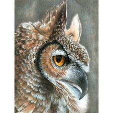 "Color Pencil By Number Kit 8.75""X11.75""-Se pia Owl"