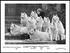 SAMOYED ARTIC KENNELS LADY AND HER NAMED DOGS LOVELY IMAGE DOG PRINT POSTER
