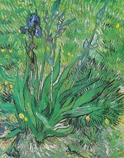 Gogh Van Vincent Iris Canvas 16 x 20  #6829