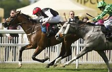 The only working horse racing winning strategy and analysis here on Ebay