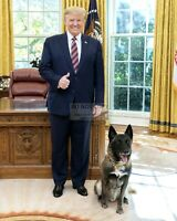 "DONALD TRUMP WITH ""CONAN"" THE MILITARY WORKING DOG IN 2019 - 8X10 PHOTO (SP288)"