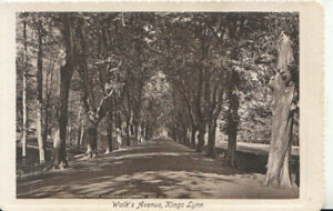 Norfolk Postcard - Walk's Avenue - Kings Lynn - Ref TZ6345
