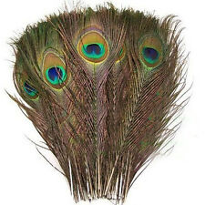 50pcs Natural Peacock Tail Feathers (Big Eyed) about 26-30cm DT