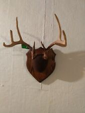 Whitetail deer antlers mounted