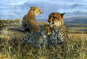 Cheetah Limited Edition Giclee Print