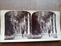 1896 Underwood Stereoview Queen's Hospital Grounds Honolulu Hawaiian Islands