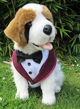 Dog Tuxedo/Coat/Jacketcostume. Wine/White -Black dickie bow: Extra Large*