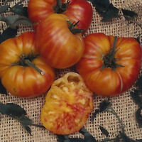 VEGETABLE TOMATO AZOYCHKA 100 FINEST SEEDS #4322