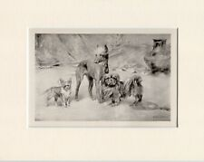 More details for chinese crested chihuahua pekingese rare 1897 antique dog print arthur wardle