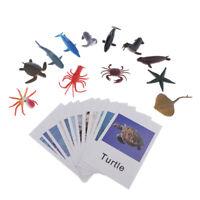 24x Miniature Figure Language Learning Game Montessori Language Development