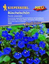 Kiepenkerl - Phacelia Phacelia Campanularia 3699 Cielo Blu Fiore Estate