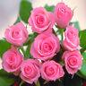 Fresh Cut Roses Fragrance Oil, Candle Wax Melt Scents Soap Bath Bomb Perfume CLP