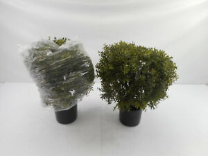 All Season Green 2 Pack Fake Boxwood Bushes Outside Potted Tree