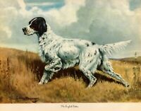 1942 Antique ENGLISH SETTER Dog Art Print Edwin Megargee English Setter 3237