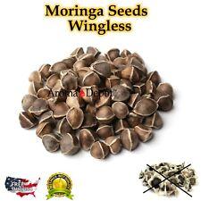 Moringa Oleifera Seeds US Customs Cleared Semillas de Moringa US Wholesale Lot