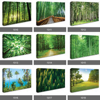 Forest Woodland Trees Sun Stunning Scenery Photo Wall Art Landscape Canvas RMC
