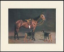 DOBERMAN PINSCHER DOGS AND HORSE GREAT DOG PRINT MOUNTED READY TO FRAME