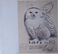 Beau Tunnicliffe Oiseau Imprimé ~ Neigeuse Hibou