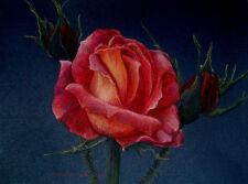 Original Pastel Drawing Pink Rose & Rosebuds Sally Porter Wildlife Art