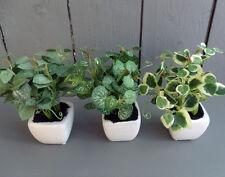 12 x Artificial Mini Herb Plants in Pots