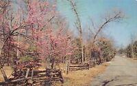 Lebanon Tennessee~Cedars of Lebanon State Park~Split Rail Fence~1967 Postcard