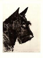 1946 Antique Scottie Dog Print SCOTTISH TERRIER Print Morgan Dennis Dog Art 3123