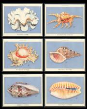Sea-Shells Pacific Triton Conch Clam Cowry Trade Cards