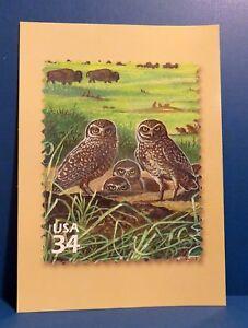 "Great Plains Prairie : Burrowing Owl, 2001 USPS 5"" x 7"" Postcard, Joes CO"