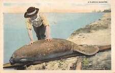 Florida Manatee on Beach Vintage Postcard Jh230521
