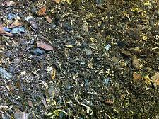 Pollywog piantati Terrarium Blend 2.5 Ltr ~ FROG bioattivi non ABG MIX TERRA Preta