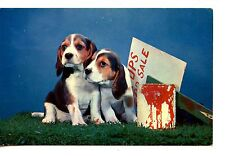 Pups For Sale-Red Paint Can-Maine Greetings-Vintage Pet Dog Animal-1958 Postcard