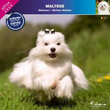 BICHON MALTAIS 2020 - CALENDRIER MURAL AFFIXE (MALTESER) …