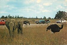African Lion Safari Rockton Ontario Canada Postcard 1960's 1970's old cars Nova