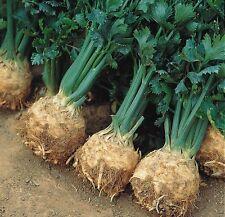 Le sementi biologiche-verdura-Suffolk Erbe SPINACI GIGANTE INVERNALE PITTORICA Pack