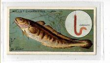 (Jb4449-100)  WILLS,FISH & BAIT,THE SILVER BURBOT,1910#17