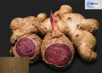 DR T&T Black Galingale Kaempferia parviflora extract 5,7- dimethoxyflavone 2.5%