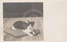 RPPC of BLACK & WHITE CAT ON PILLOW PLAYING WITH TASSEL Postcard REAL PHOTO