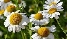 Seeds Herb Chamomile Medicinal Wild Flower Garden Cut Organic Heirloom Ukraine