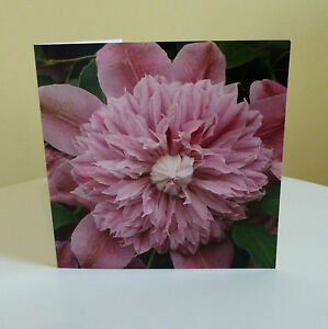 Blank greetings cards Flower Pink Clematis Birthday All Occasions Notecard