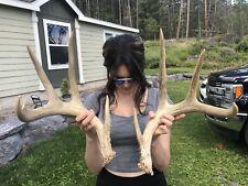 Antlers Wild Whitetail Deer 4X4 Set!Knife~Decor~Mount~Tro phy~Elk~Sheds~Moose~Lot