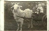 RPPC Baby in goat-drawn cart ~ 1904-1918 real photo postcard sku777