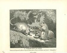alte Grafik Druck Stich, Opossum von 1835 #E804
