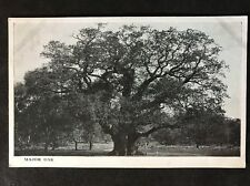 RP Vintage Postcard - Nottinghamshire #A4 - Major Oak